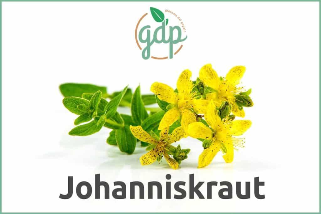 Johanniskraut GDP