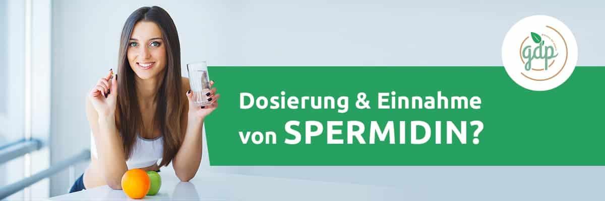 Dosage and taking spermidine