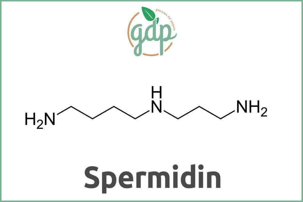 Guida al PIL spermidina