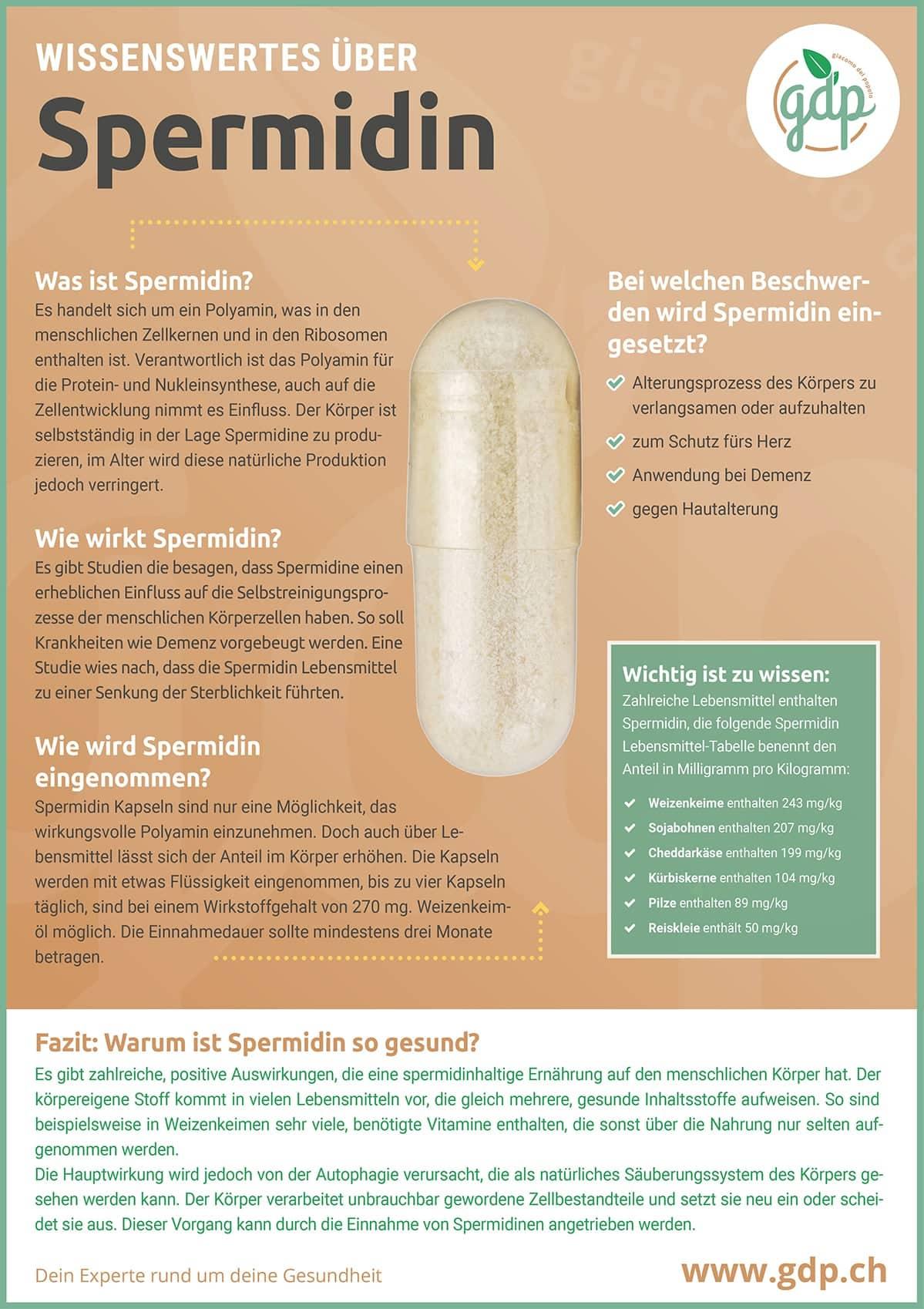 Infographie sur le pib de la spermidine