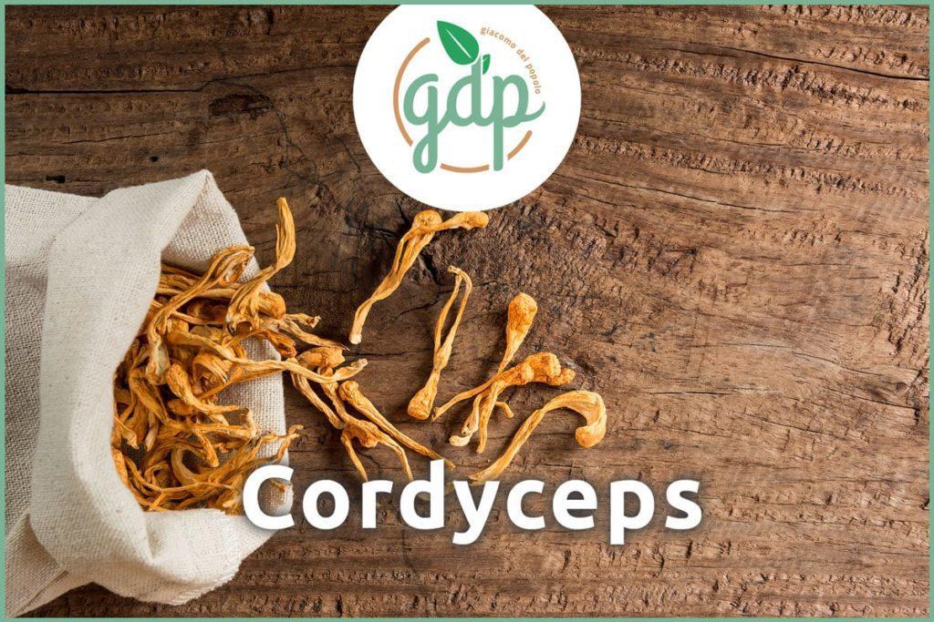 Cordyceps Titelbild gdp