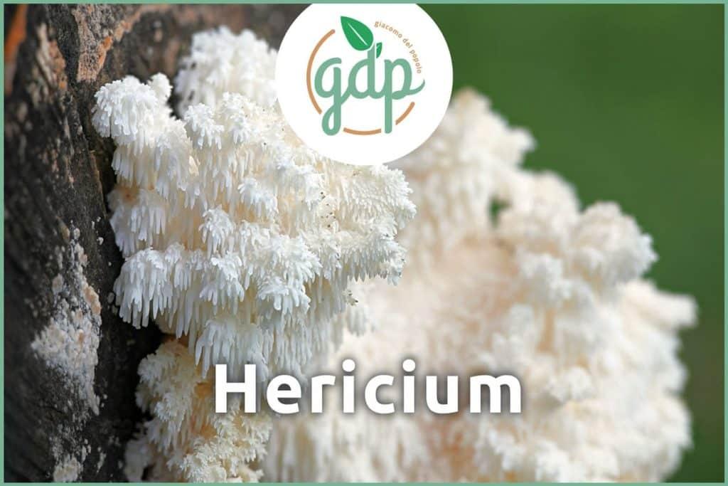 Hericium Titelbid
